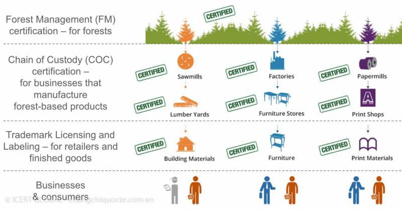 Các tiêu chuẩn FSC được sử dụng hiện tại - Icert global