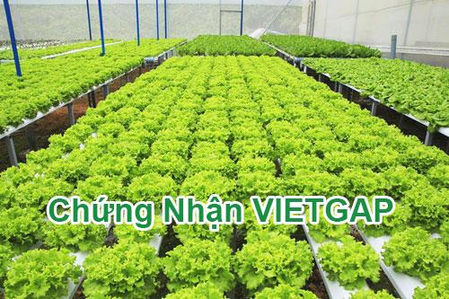 Tư vấn chứng nhận VietGAP