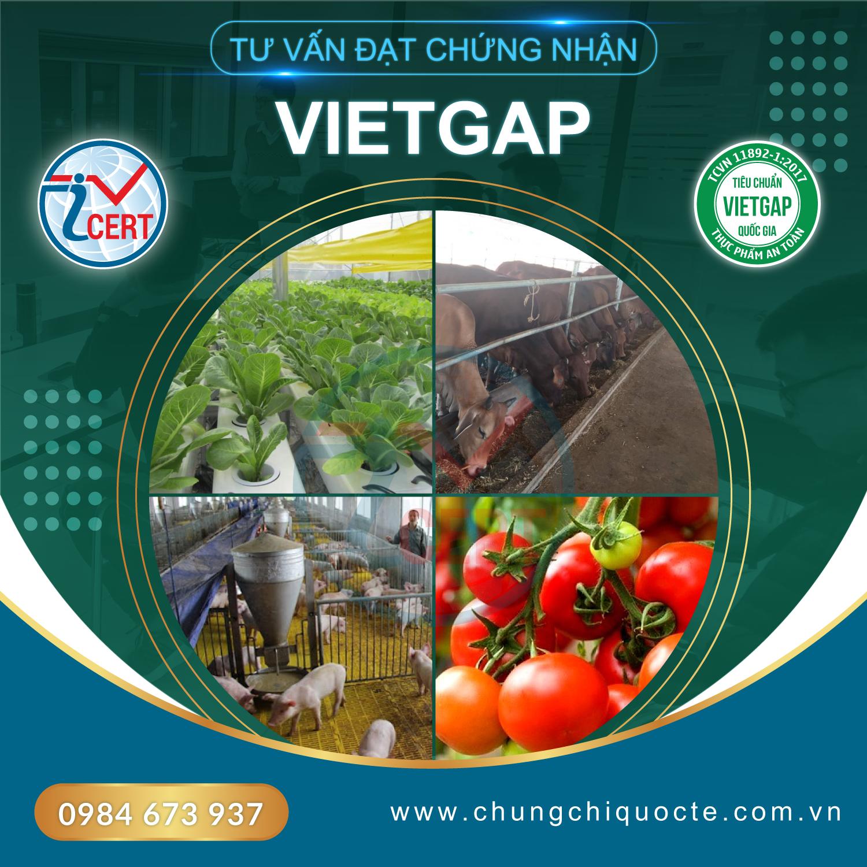 Icert Global là đơn vị tư vấn chứng nhận VietGAP uy tín và chuyên nghiệp.