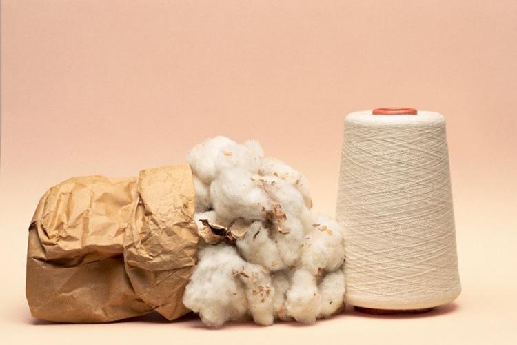Bông cotton là nguyên nhân chính khiến các doanh nghiệp cần chứng chỉ OCS.