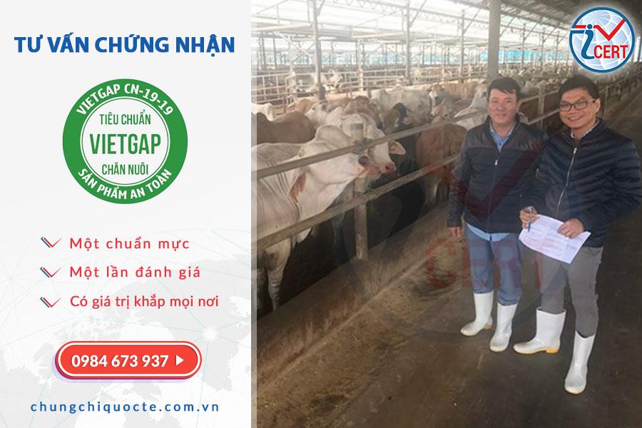 Tư vấn chứng nhận VietGAP chăn nuôi